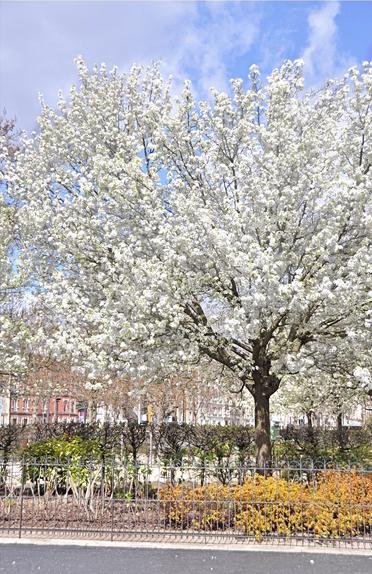 L'arrivée du printemps, square Georges-Méliès.